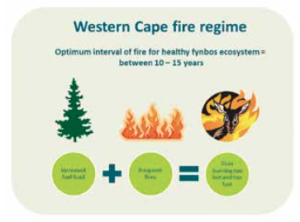 Figure 4: With the Western Cape being one of the worst affected areas in South Africa, it is necessary to pay special attention to fire manage- ment within the mountain catchments of the Western Cape area.