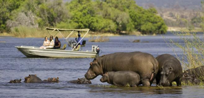 hippo botswana