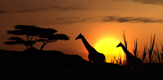 Tourism Africa