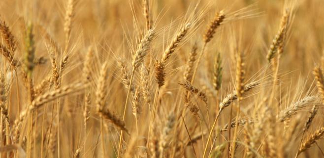 Wheat imports