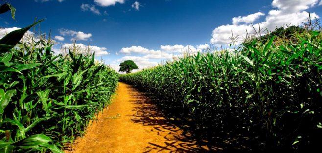 AgricultureAfrica
