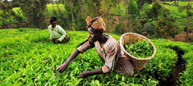 africa-Farming